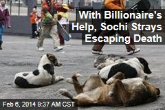 With Billionaire's Help, Sochi Strays Escaping Death