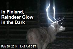 In Finland, Reindeer Glow in the Dark