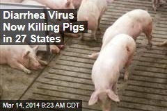 Diarrhea Virus Now Killing Pigs in 27 States