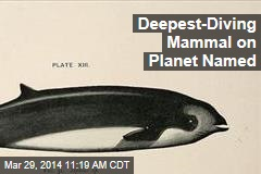 Deepest-Diving Mammal on Planet Named