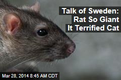 Talk of Sweden: Rat So Giant It Terrified Cat