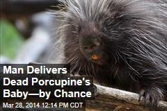 Driver Delivers Baby Porcupine After Its Mom Is Killed
