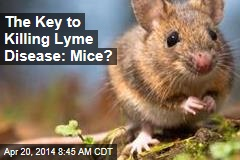 The Key to Killing Lyme Disease: Mice?