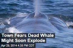 Town Fears Dead Whale Might Soon Explode