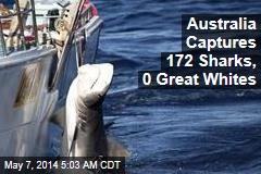 Australia Captures 172 Sharks, 0 Great Whites