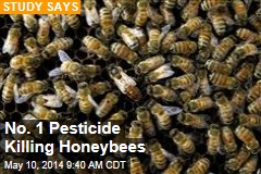 No. 1 Pesticide Killing Honeybees