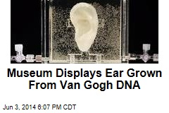 Museum Displays Ear Grown From Van Gogh DNA
