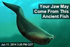 This Little Fish Is Big Milestone in Evolution