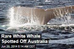 Rare White Whale Spotted Off Australia