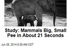 Study: Mammals Big, Small Pee in About 21 Seconds