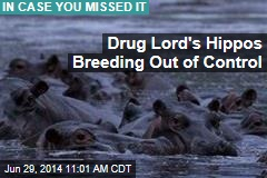 Drug Lord's Hippos Breeding Out of Control