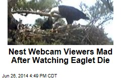 Nest Webcam Viewers Mad After Watching Eaglet Die
