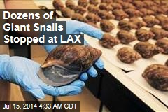Dozens of Giant Snails Stopped at LAX