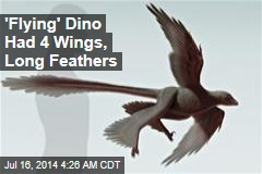 Biggest 'Flying Dinosaur' Had 4 Wings, Long Feathers