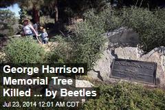 George Harrison Memorial Tree Killed ... by Beetles