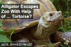 Alligator Escapes Zoo With Help of ... Tortoise?