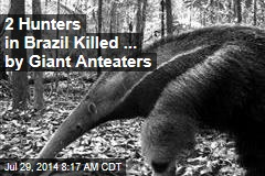 2 Hunters in Brazil Killed... by Giant Anteaters