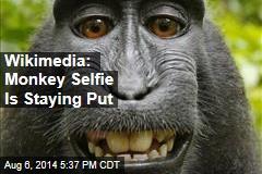 Wikimedia: Monkey Selfie Is Staying Put