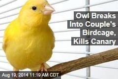 Owl Breaks Into Couple's Birdcage, Kills Canary