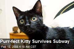 Purr-fect Kitty Survives Subway