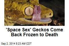 'Space Sex' Geckos Come Back Frozen to Death