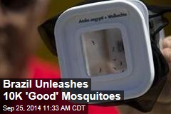 Brazil's New Dengue Fighters: 10K 'Good' Mosquitoes