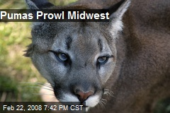 Pumas Prowl Midwest