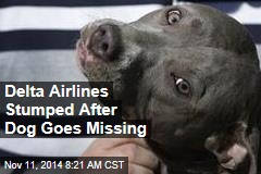 Delta Airlines Stumped After Dog Goes Missing