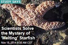 Scientists Solve the Mystery of 'Melting' Starfish