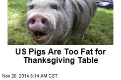 US Pigs Are Too Fat for Thanksgiving Table