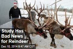 Study Has Bad News for Reindeer