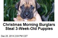 Christmas Morning Burglars Steal 3-Week-Old Puppies