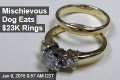 Mischievous Dog Eats $23K Rings