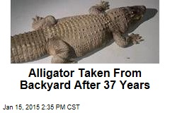 Alligator Taken From Backyard After 37 Years