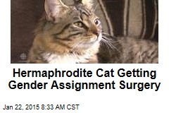 Hermaphrodite Cat Getting Gender Assignment Surgery