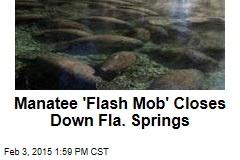 Manatee 'Flash Mob' Closes Down Fla. Springs