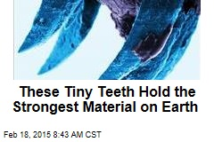 These Tiny Teeth Hold the Strongest Material on Earth