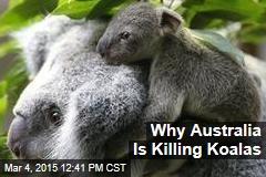 Why Australia Is Killing Koalas