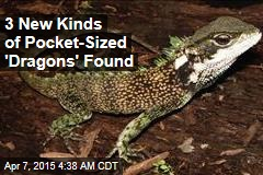 3 New Kinds of Pocket-Sized 'Dragons' Found