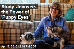 Study Uncovers the Power of 'Puppy Eyes'