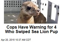 Cops Have Warning for 4 Who Swiped Sea Lion Pup