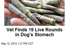Vet Finds 19 Live Rounds in Dog's Stomach
