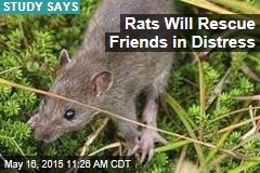 Rats Will Rescue Friends in Distress