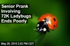 Senior Prank Involving 72K Ladybugs Ends Poorly
