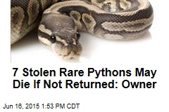 7 Stolen Rare Pythons May Die If Not Returned: Owner
