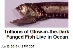 Trillions of Glow-in-the-Dark Fanged Fish Live in Ocean