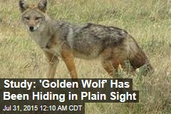 Study: 'Golden Wolf' Has Been Hiding in Plain Sight