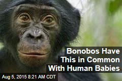 Bonobos Have This in Common With Human Babies