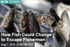 How Fish Could Change to Escape Fishermen
