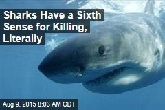 Sharks Have a Sixth Sense for Killing, Literally